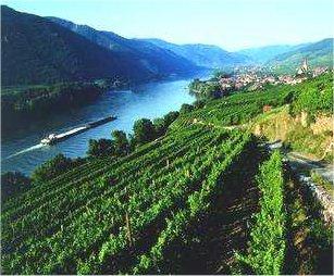 Rakouská vína