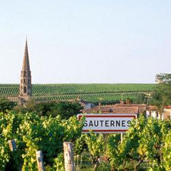 Sauternes a Barsac