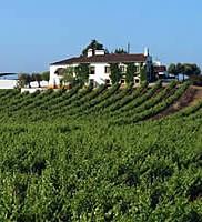Portugalská vína