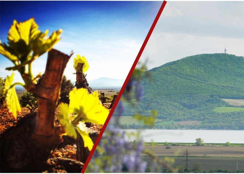 Sada vín Morava versus Svět Velká
