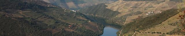 Portugalská vína portské