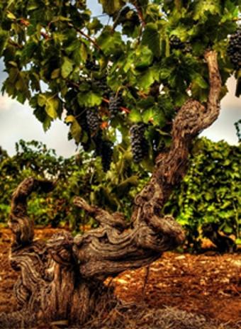 Australské vinařství Langmeil