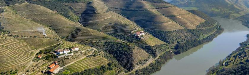Portská vína a vína z Douro - Quinta da Romaneira