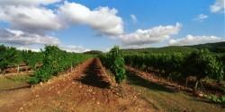 Cahors Jihozápad Francie