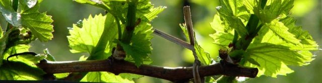 Morava - vinařská oblast