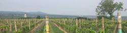 Česká vínařská oblast