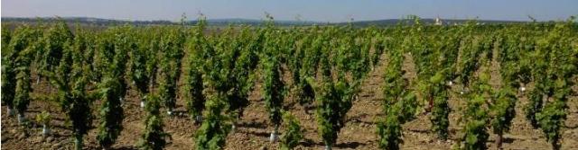 Znojemská vinařská podoblast