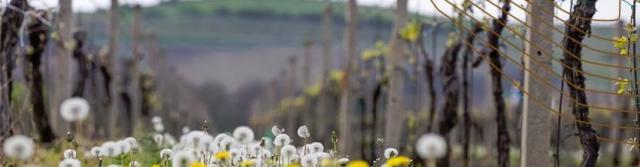 Přívlastková moravská vína
