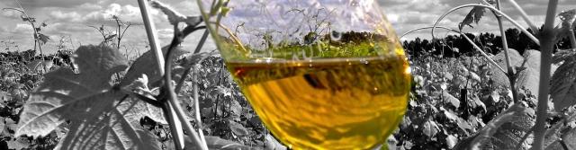 Rozdělení vína podle sladkosti