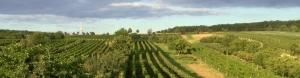Vinařství a vinaři